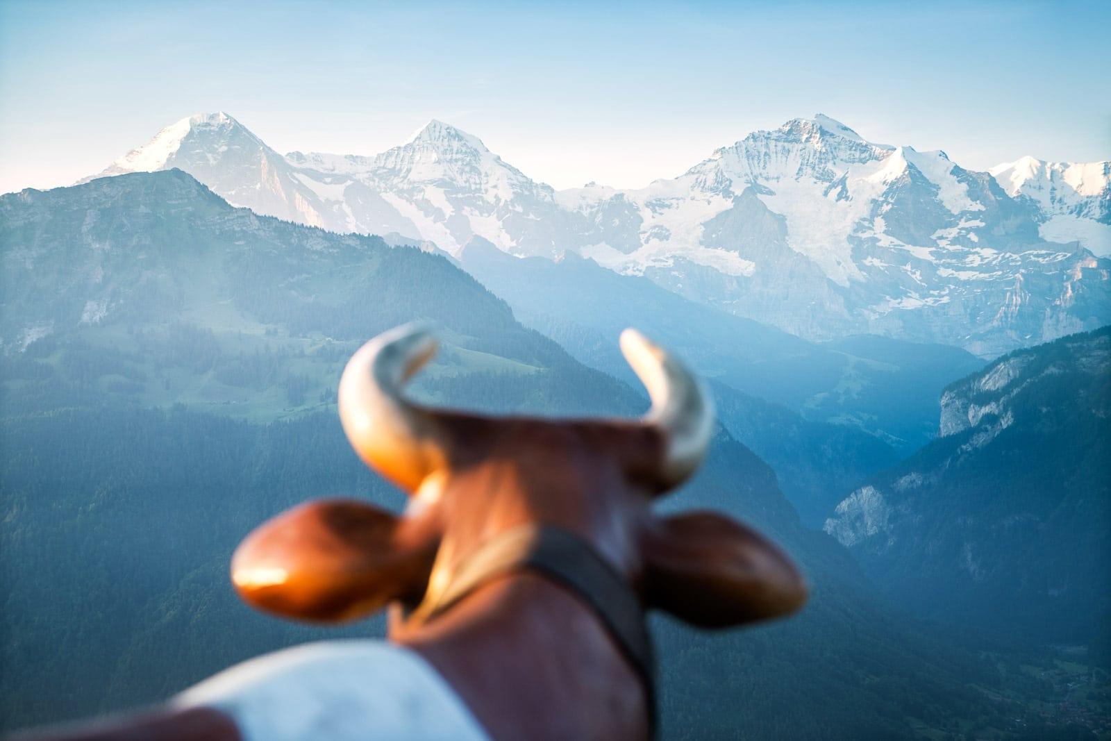 Ibex, or Steinbock, Switzerland